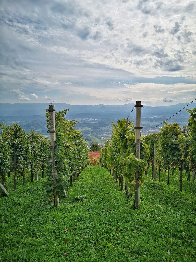 Best things to do in Dolenjska
